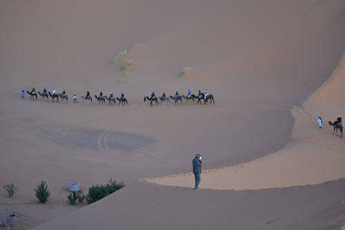 Camels Route in the Desert of Morocco, Animals