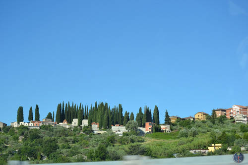 Tall Trees & Amazing Landscape of Houses in Rome, Itay
