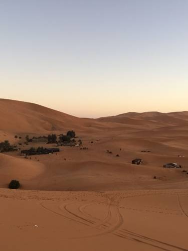 Desert, Trees and the Camels