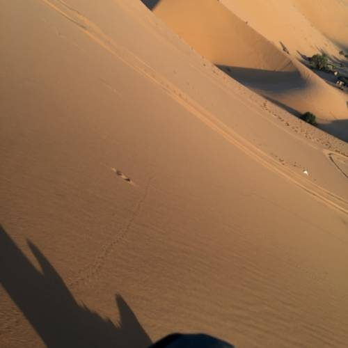 Shadow in the Desert