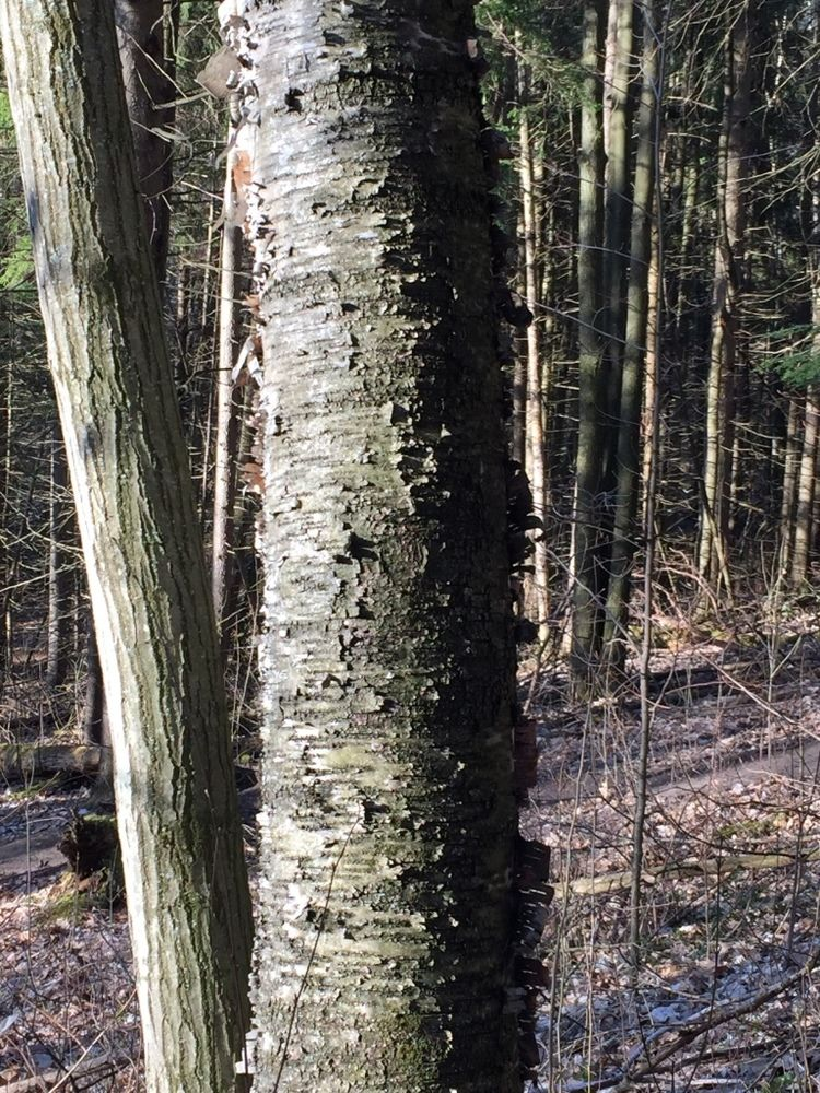 Dark Colored Tree Trunks on a Sunny Day