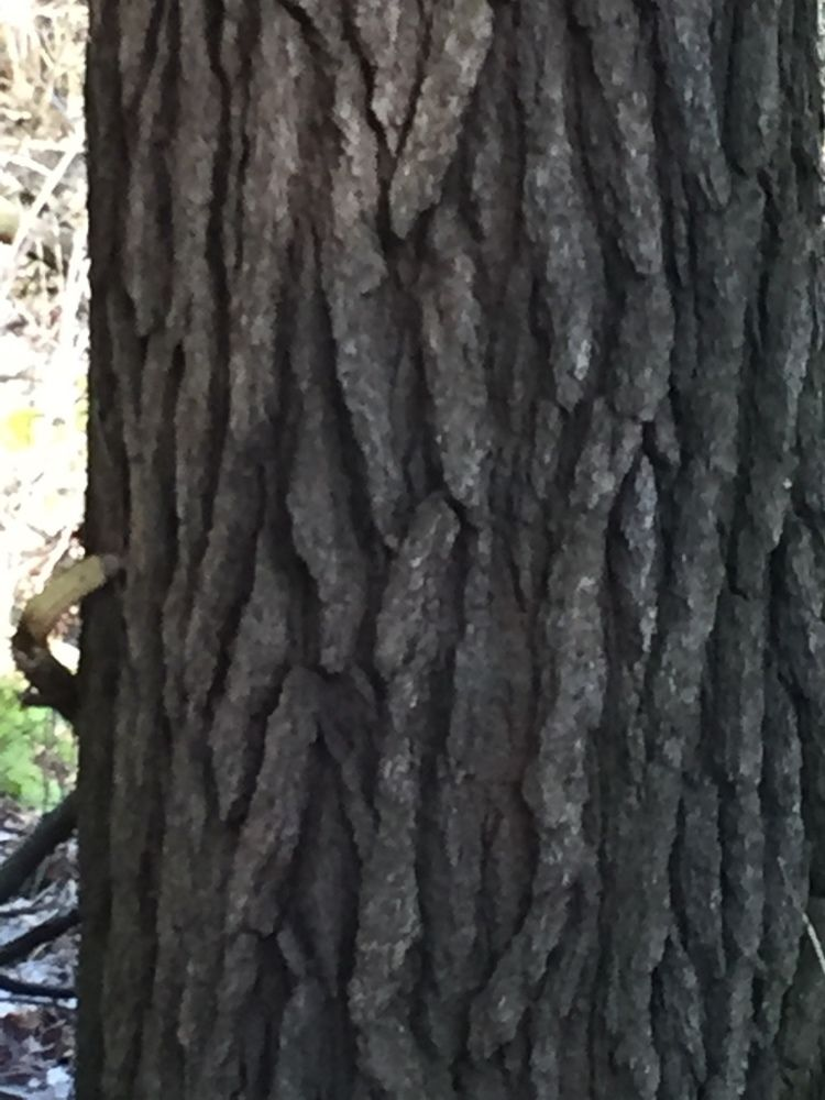 Tree Trunk's Closeup