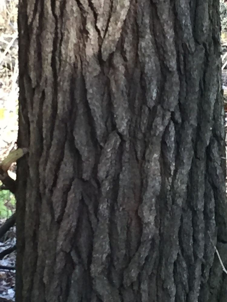 Closeup of Tree Trunk's Texture