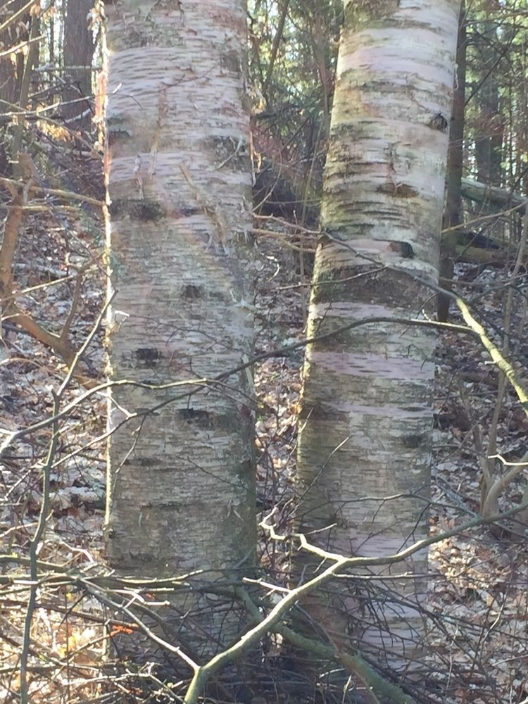Small Branches and Tree Trunks