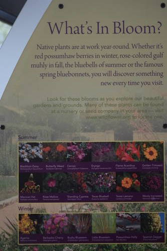 Lady Bird Johnson Wildflower Center - Types of Wildflowers for Summer and Winter