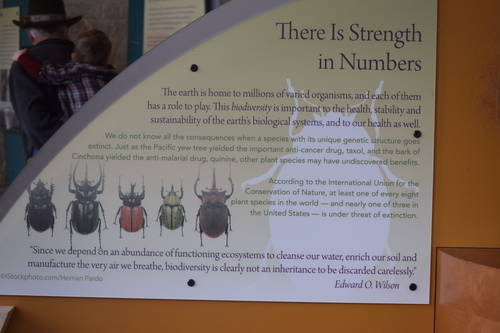 Lady Bird Johnson Wildflower Center - There Is Strength in Numbers