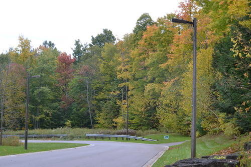 Colors of the Fall Season at Oak Ridges Forest