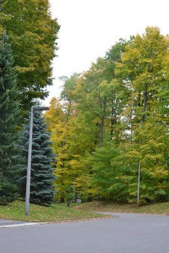 Colors of Fall at Oak Ridges Forest