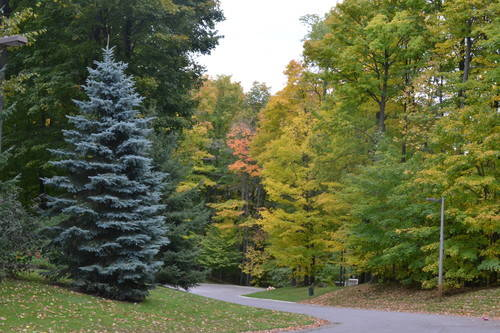 Colors of the Fall Season at Oak Ridges Moraine