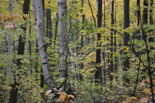 Oak Ridges Forest in the Fall