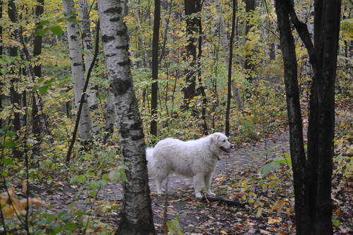 Beautiful Dog at Oak Ridges Forest