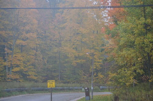 Oak Ridges Forest in the Fall Season