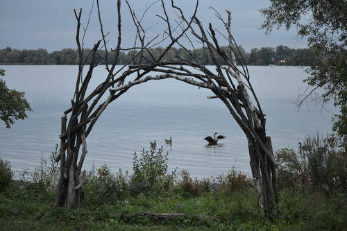 Ducks in the Middle of Arched Branches at Lake Wilcox, Wildlife