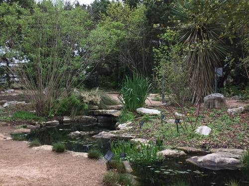 Pond & Plants at the Lady Bird Johnson Center, Nature