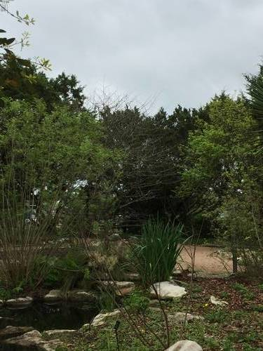 Trees, Plants, Rocks & Flowers at the Lady Bird Johnson Center, Nature
