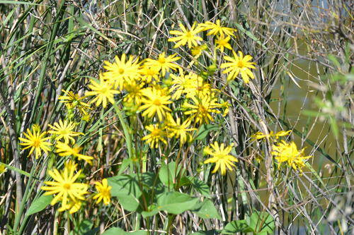 Bunch Of Yellow Flowers, Nature