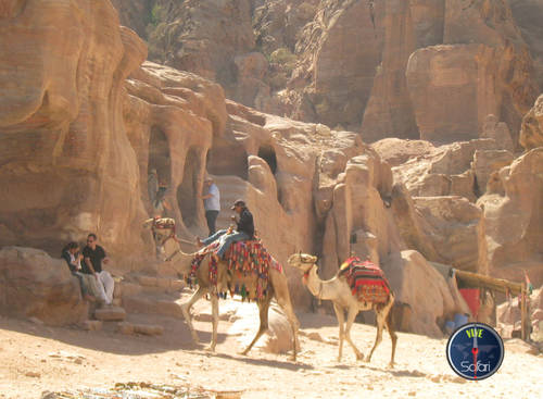 Camels in Petra and Wadi Rum, Jordan