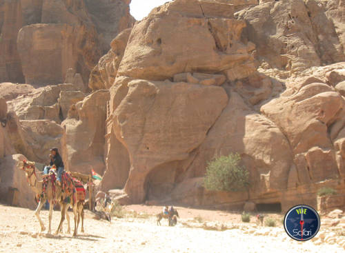 Camels Beside the Mountains of Petra and Wadi Rum, Jordan