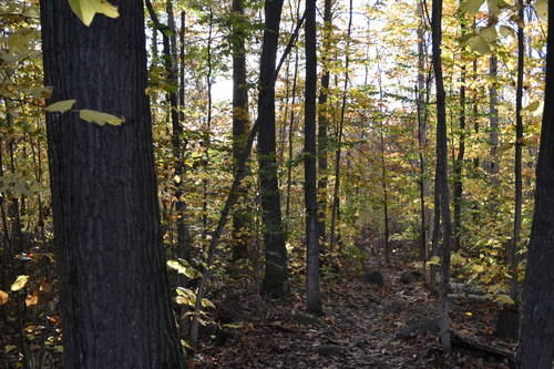 Oak Ridges Forest, fall