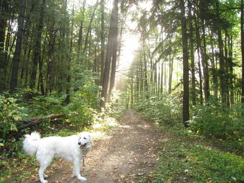 White Dog In The Forest