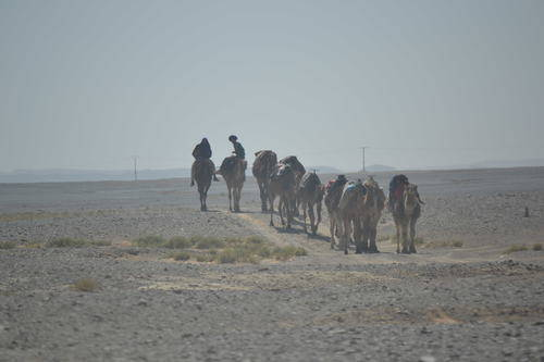 Camels route