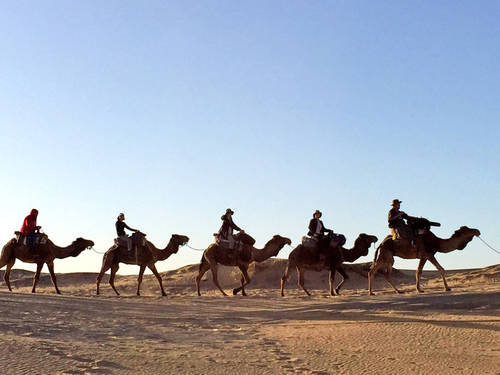 Camels On Route Through the Desert, Animals