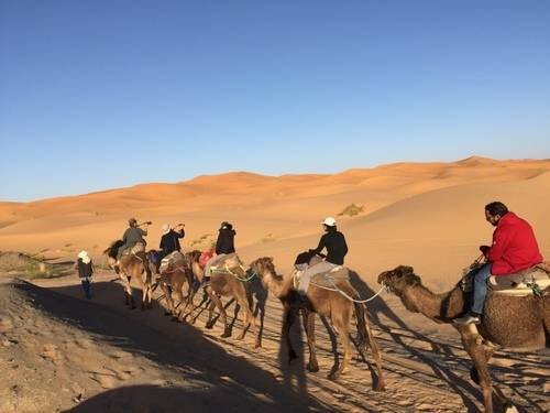Riding Camels In The Morocco Desert.