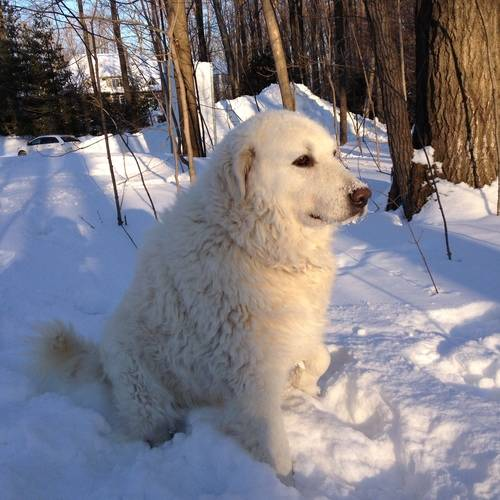 White Dog, Nature