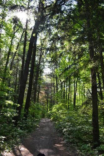 Oak Ridges Forest, Spring